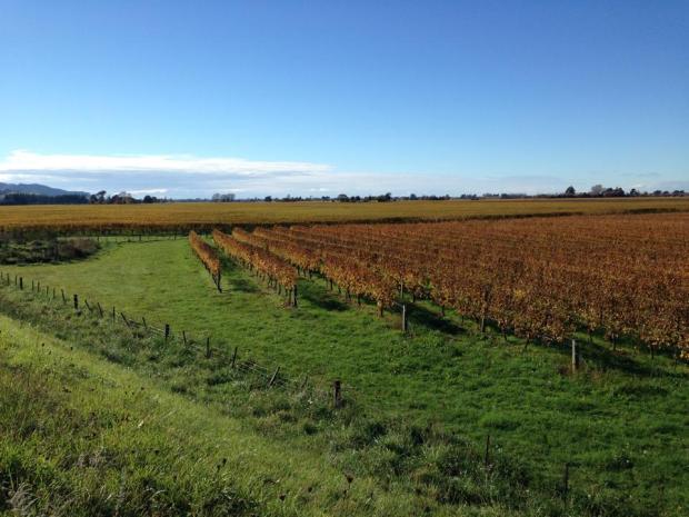 vineyard6